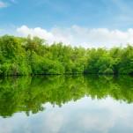 Guided Mangrove Waverunner Tour